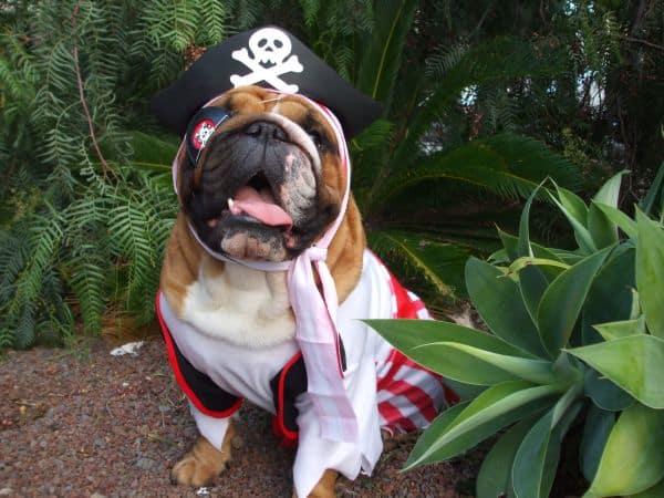 perro-pirata-disfracesmimo