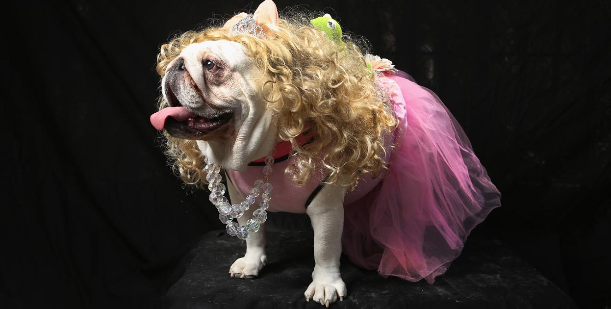 perro-princesa-disfracesmimo
